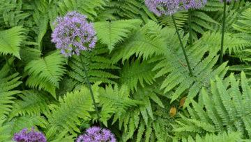 ferns-flowers-900-sq