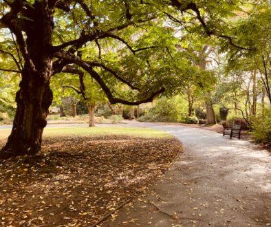 trees-2020.jpg